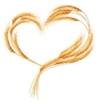 Wheat ears Heart isolated on the white EPS 10 vector image vector image