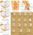Anatomy of the Knee vector image vector image