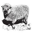 shropshire ram vintage vector image vector image