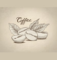 coffee beans with leaves and handwritten vector image vector image