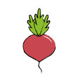 delicious and health onion vegetable vector image vector image