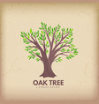 oak beautiful tree vector image vector image