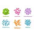 positive probiotic bacterium microscopic cells set vector image vector image
