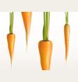 3d realistic carrots - orange vegetables vector image vector image