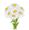 beautiful daisies on white background vector image vector image