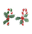 candy cane with holly vector image vector image