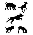 dalmatian dog pet animal silhouette 01 vector image vector image