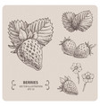 sweet strawberry vector image