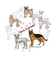 dogs sketches background dogs of different vector image