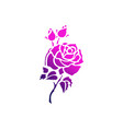 purple rose logo icon vector image