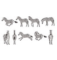 set african zebra side and front view cartoon vector image vector image