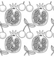 cherries and pomegranates black and white vector image