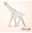doodle giraffe vector image