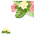 flower hibiscus tropical plant summer holiday vector image