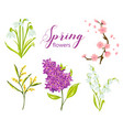 spring flower set with lilac lily snowdrop vector image vector image