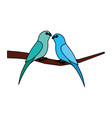 two parrots bird on branch vector image