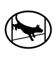 Agiliti sport dog vector image