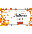 hello autumn sale lettering banner special offer vector image