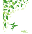 Abstract green leaves and hummingbirds background vector image