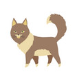 cute cartoon kittie or cat with colored fur vector image