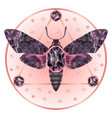 death head moth jewelry mystical pattern vector image