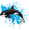 killer whale isolated vector image