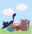 pet shop cat in cardboard box and kittens vector image vector image