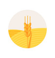 ripe ear of wheat stage of bread production vector image