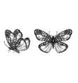 set hand drawn butterflies for design vector image vector image