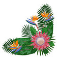 tropical bouquet corne rcomposition vector image vector image