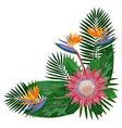 tropical bouquet corne vector image