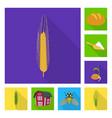 wheat and corn symbol vector image