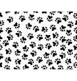 wildcat foils vector image vector image