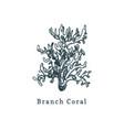branch coral drawing of sea vector image vector image