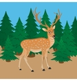 Deer on a background of green forest vector image