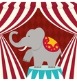 Elephant icon Circus and Carnival design vector image vector image