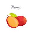 mango exotic juicy stone fruit isolated vector image vector image