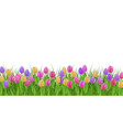 spring floral border with colorful tulips on fresh vector image