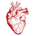 anatomical medical human heart organ vector image