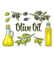 bottle glass oil with cork stopper and branch vector image vector image