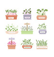 cartoon fresh organic sprouted plants bagreens vector image