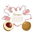 longan exotic juicy fruit plant related to litchi vector image vector image
