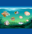 many fish swimming under the ocean vector image