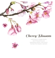 Hand Drawn Cherry Blossoms vector image