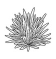 agave plant sketch vector image vector image