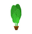 shpinat leaves potted into small brown container vector image