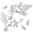 doves or pigeons with olive branch or twig in beak vector image vector image