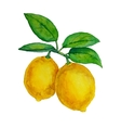 Watercolor lemons hanging on branch with leaves vector image
