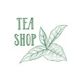 green tea tree branch herb label lettering tea vector image