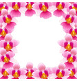 pink vanda miss joaquim orchid border vector image vector image